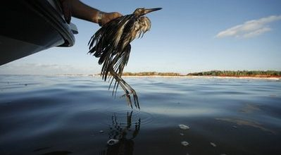 Feds, BP fight over next step