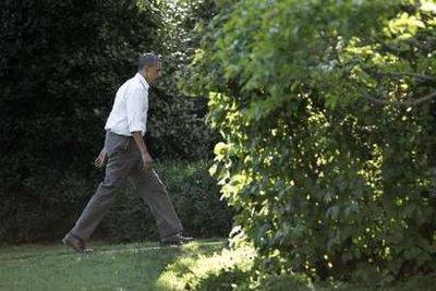 New polls showcase Obama's freefall