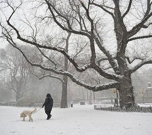 A New Yorker walks his dog in Central Park (AFP)