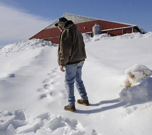Joe Greenbacker, a partner at Brookfield Farm, looks back at collapsed hoop barn on his farm while walking up a steep snowy hill to his dairy barn in Durham, Conn.  The barn collapsed under the weight of snow killing one calf. Connecticut agriculture officials say back-to-back snowstorms and a recent ice storm have brought down the roofs of more than 130 barns, greenhouses, equipment buildings and other farm buildings. More than a dozen dairy cows, two horses and a calf have been killed in building collapses. (AP Photo/Jessica Hill)