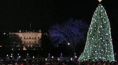 Winds topple National Christmas tree