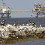 Brown Pelicans and other birds thrive on the rocks near Dauphin Island, Ala., Monday, April 18, 2011. Natural gas rigs operate in the Mobile Bay waters at rear. (AP Photo/Dave Martin)