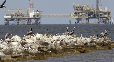 Gulf Oil Spill One Year Later
