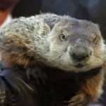 Was it the groundhog's fault?  (AP Photo/Keith Srakocic, File)