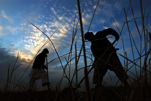 Afghan farmers work on their field on the outskirts of Mazar-e-Sharif, northern Afghanistan. (AP Photo/Mustafa Najafizada)