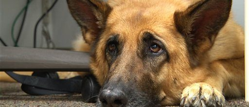 Help for embattled troops from a therapy dog