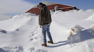 Farmers watch harsh winter destroy their way of life
